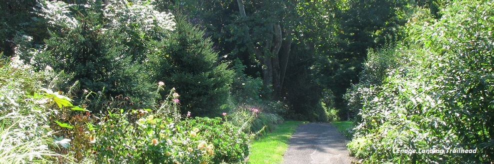 lenape landing trailhead narrow